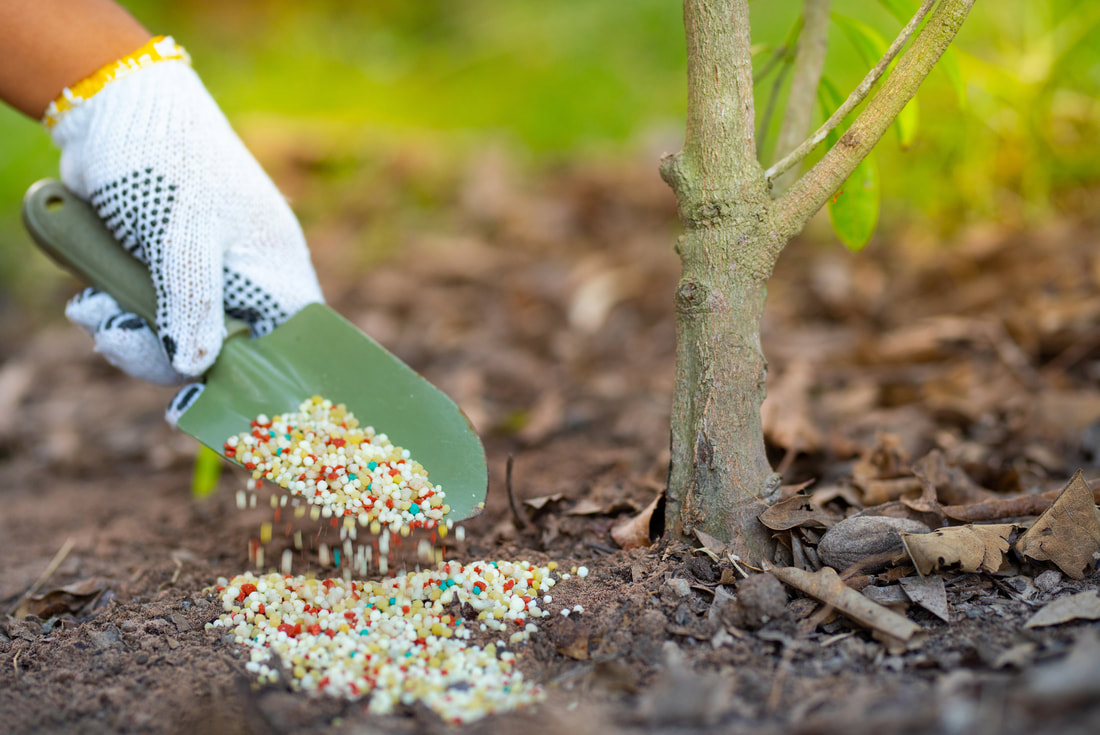 Tree fertilization increase life of tree service in Helena, MT